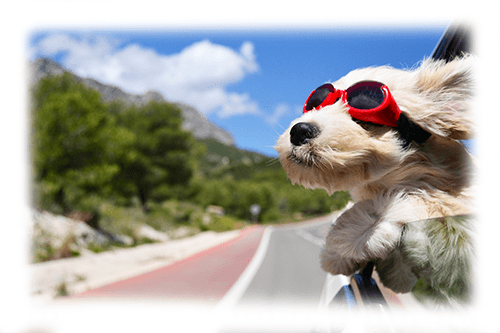 Fun with Fido: Tips for a Safe Summer with Your Favorite Pet